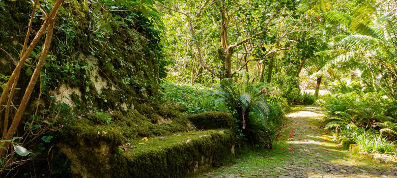 Sintra Garden Near The Pena Palace With Stone Bench Covered Moss